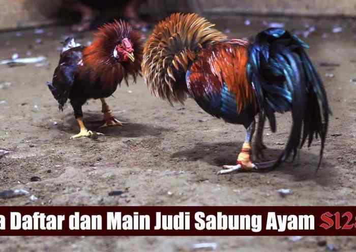Cara Daftar dan Bermain Judi Sabung Ayam Online