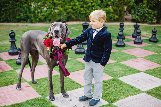 adorable dog and ring bearer | Elyse Hall Photography | Glamour & Grace