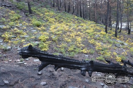 Burned hillside next to our campground.