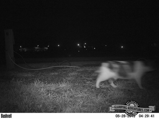 Critter cam at the KOA in Dubois, WY. :)