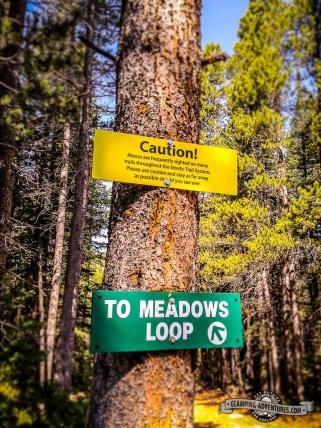 Keeping an eye out of the moose. Eldora Ski Resort.