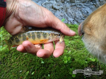 Daisy checking out the little brook trout.