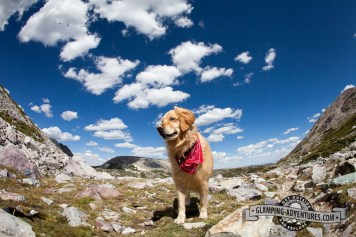 Daisy made it to the top! Medicine Bow Trail. Sugarloaf Rec. Area, WY.