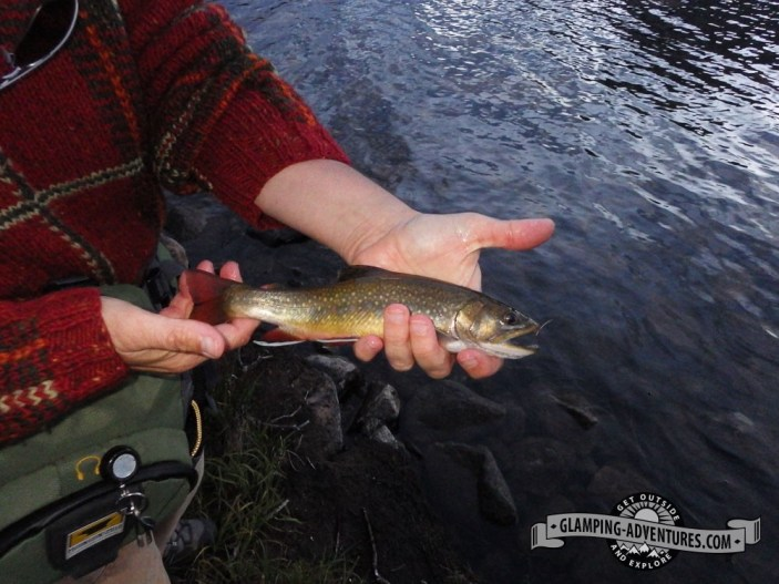 Beautiful colors on the brook trout! Libby Lake, WY.