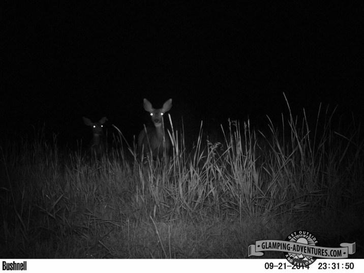 Deer visitors after the weekend at Sylvan Lake S.P.