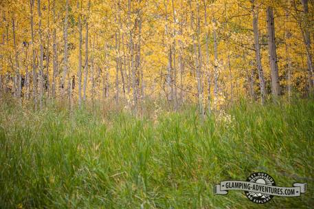 Beautiful aspens and willows. Sylvan Lake S.P.