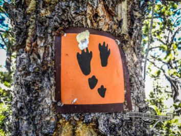 We love the old trail signs nailed to the trees. Snowshoe Hare Trail, Golden Gate Canyon S.P.