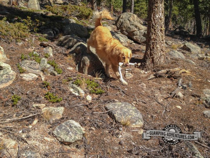 Daisy found some more bones. Mule Deer Trail. Golden Gate Canyon S.P.