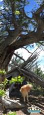Structure along the CO Trail. Kenosha Pass, CO.