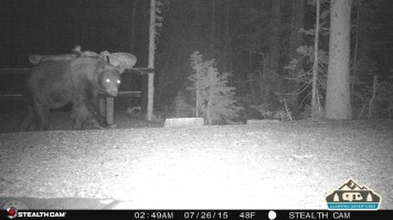 1. Bear walking through our site.