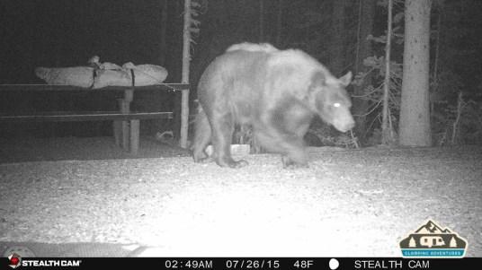 5. Bear walking through our site.