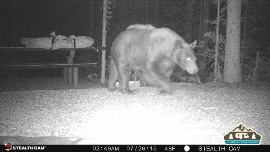 5. Bear walking through our site.