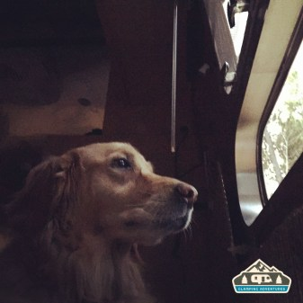 Daisy keeping watch. Revered's Ridge Campground, CO.