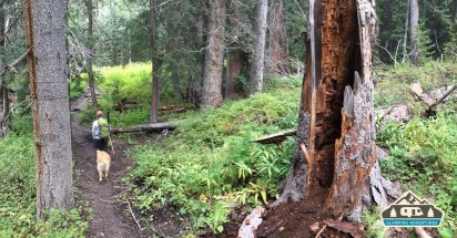 Kilpacker Trail winds through beautiful lush forest.