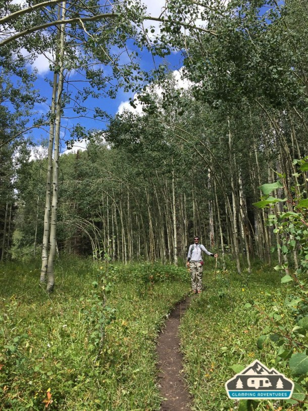 Wonderful aspen grove along Kilpacker Trail.