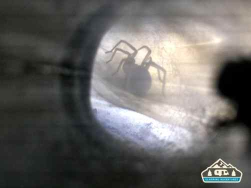 A spider has clogged the burner pipe!