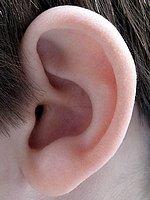 Sympathie-/Empathie-Organ: Das menschliche Ohr