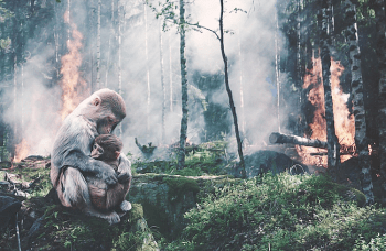 Tiere im Regenwald - Abholzung - Brandrodung - Glarean Magazin