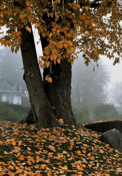 Lyrik-Literatur - Tanka-Gedicht - Wenn das Herbstlaub fällt - Minamato Yorizane - Glarean Magazin