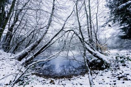 Foersterteiche_im_Winter_00009