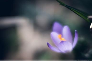 Fruehlingsblumen_2017_00006