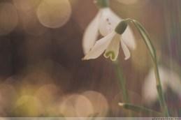 Fruehlingsblumen_2017_00009