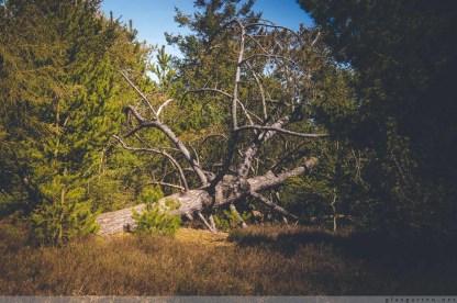 Geocaching, Wald, Dänemark, Fanö, Fano, Danmark, Geocache, Wandertour, wandern, Natur, Fotografie, Landschaft, Urlaub