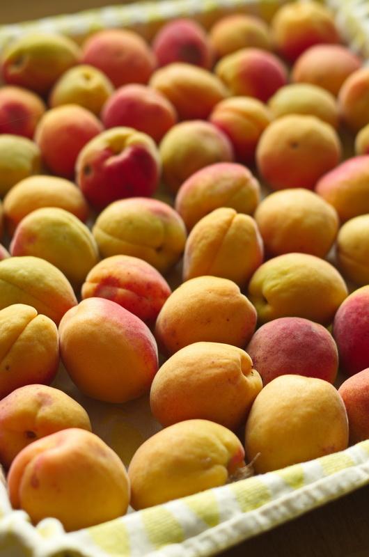 Aprikosen aus unserem Garten