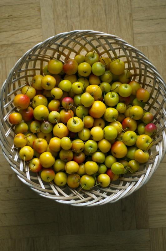 kleine hübsche Zieräpfel- frisch vom Baum