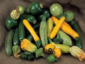 Courgettes & Squashes