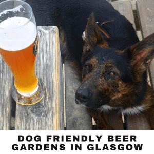 dog friendly beer gardens in Glasgow