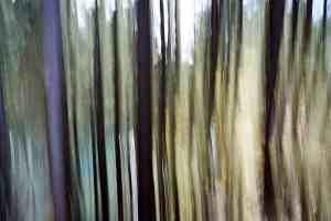 Bayerischer Wald Abstrakt 1