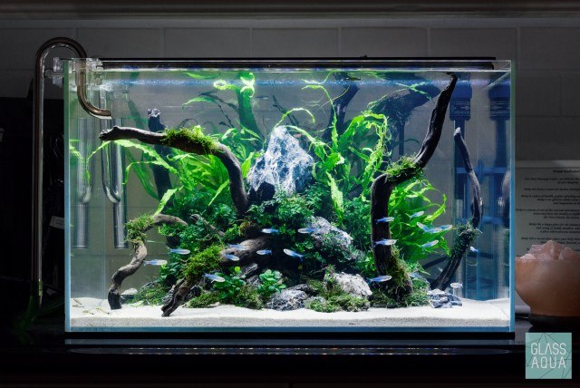 Planted Low Light Tank