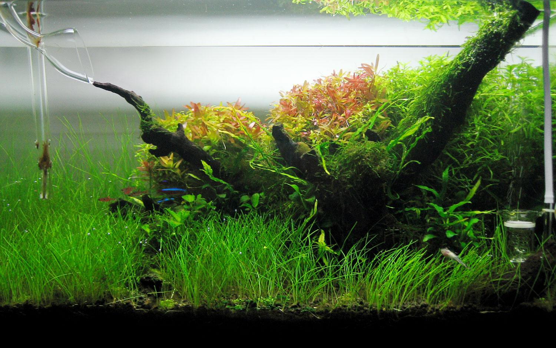 10 Gallon Planted Tank Gallery Glass Aqua