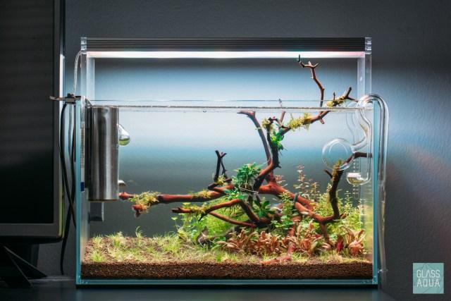 How To Setup A Planted Tank Planted Tank Aquarium Glass Aqua