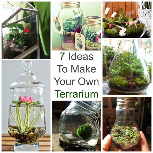 terrarium craft ideas 7 ideas to make your own terrarium glass 3066
