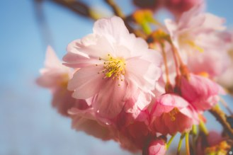 passing years of spring kisses