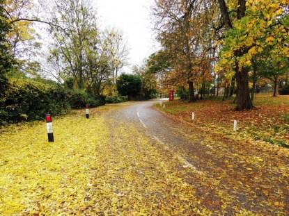 Autumn 2015. Photo: Terry Brignall