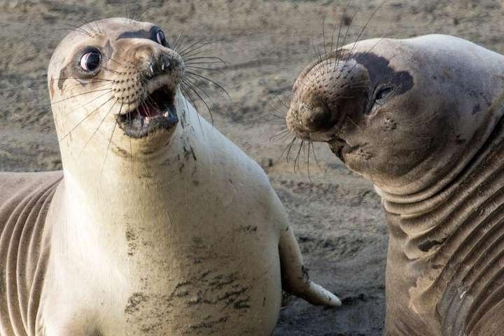 Самые смешные фото животных, которые были сделаны в нужном ...