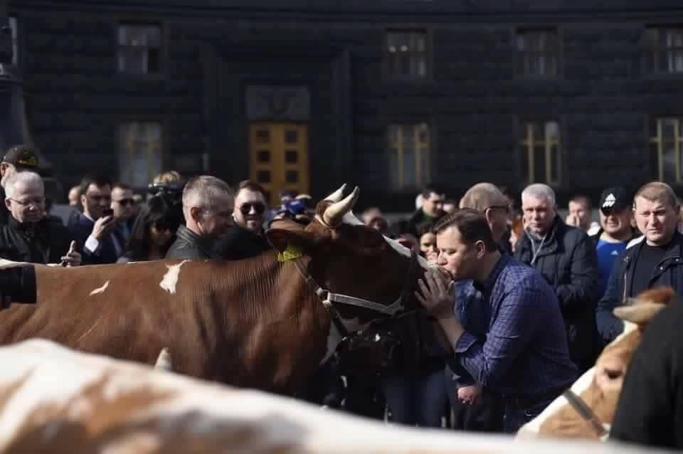 Ляшко цілує корову (фото:segodnya.ua)