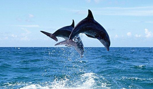 У берегов Нидерландов рыбаки поймали дельфина с двумя ...
