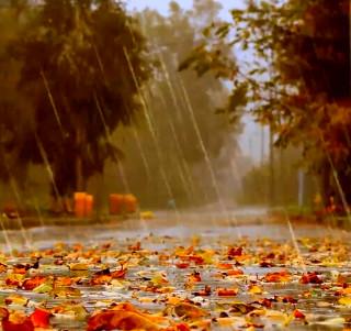 Картинки Льет Дождь Осенью