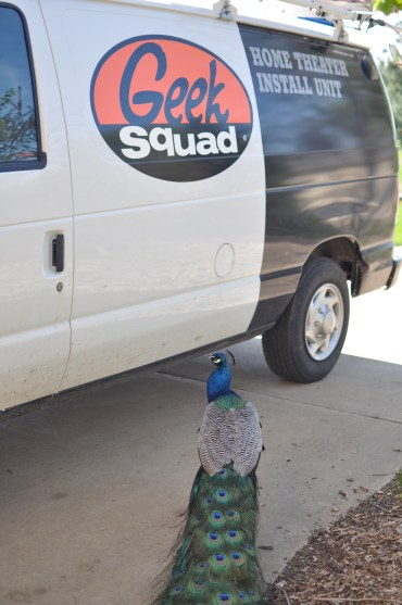 Peacock greets Geek Squad