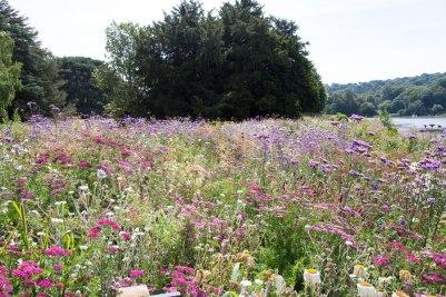 Nigel Dunnett Trentham Garden