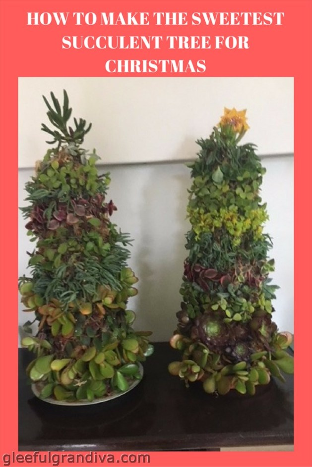 succulent tree picture