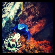 Poison frogs.