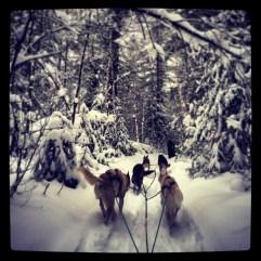 Dog-sledding.