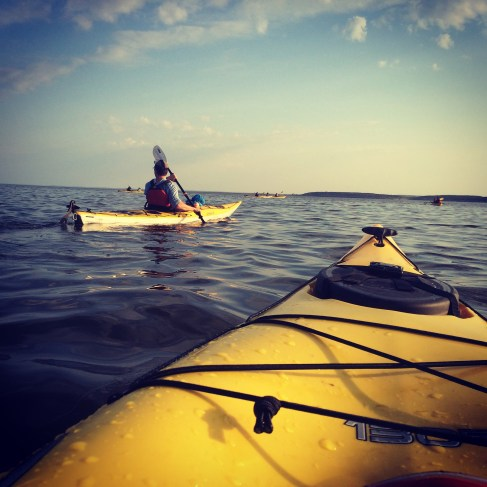 Day 415 Kayaking in Churchill River with beluga whales.