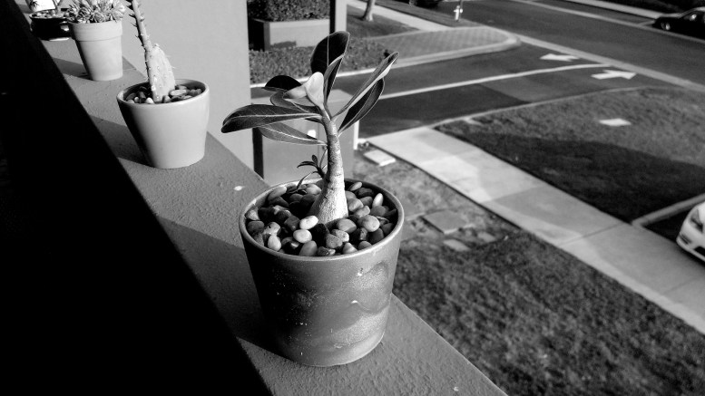 black-and-white photo of a succulent arrangement at the opening reception for Mahsa Soroudi's exhibition Nature's Cadence