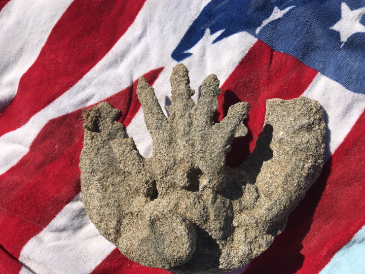 plaster casting of a hand on top of an American Flag beach towel